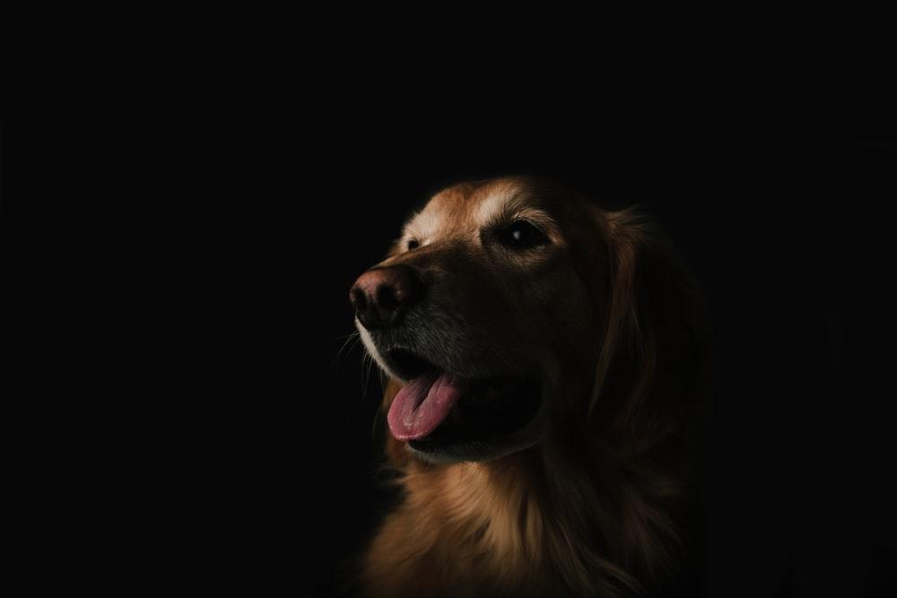 Σέρρες: Σύλληψη Γερμανού που έδεσε και έσερνε τον σκύλο του με το αυτοκίνητο